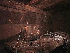 Recinto estaria associado a abrigos de animais na Arca, afirma grupo